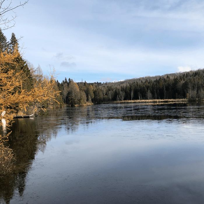 Plan directeur lac forestier