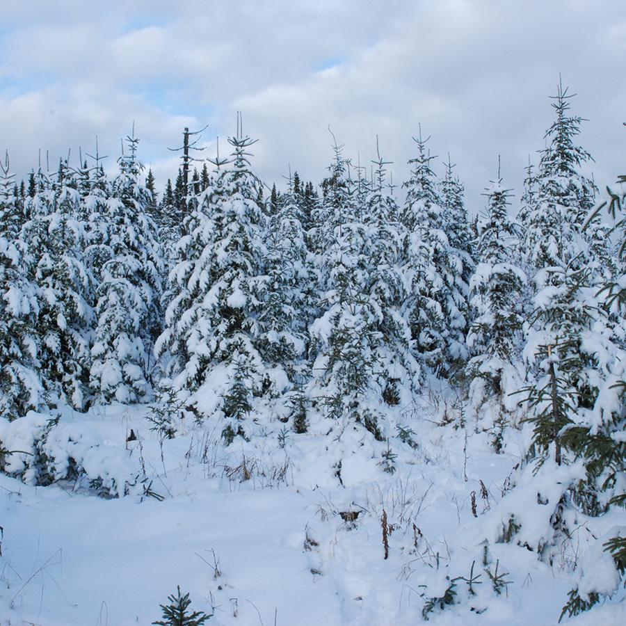 Rapport sur la forêt et les changements climatiques : des devoirs à compléter