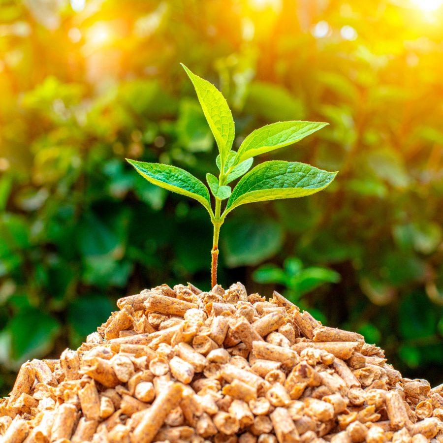 Biomasse_blog
