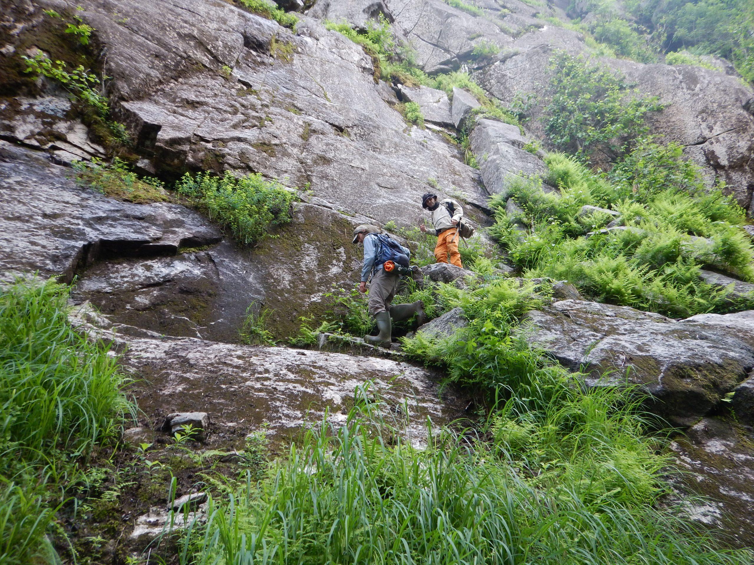 mousses et plantes rares sur le territoire ya'nienhonhndeh