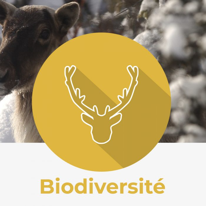 Icône biodiversité nature québec