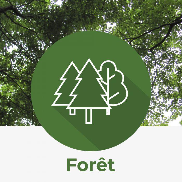 Icône forêt nature québec