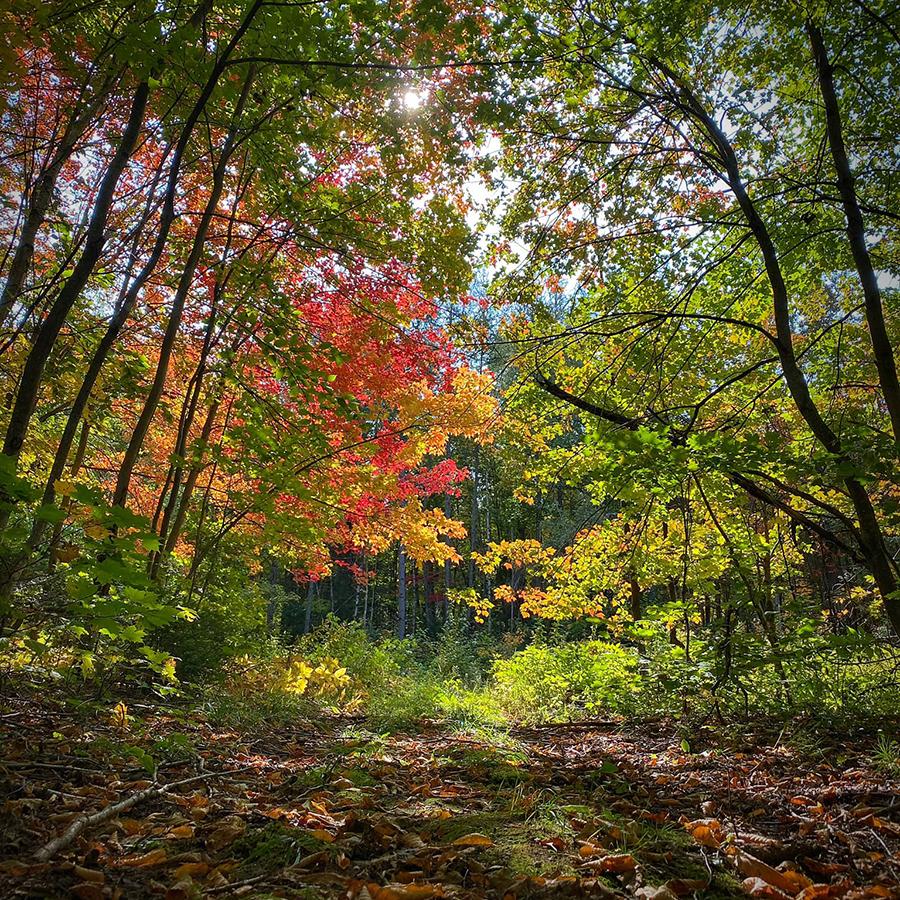 Sentier coureur des bois