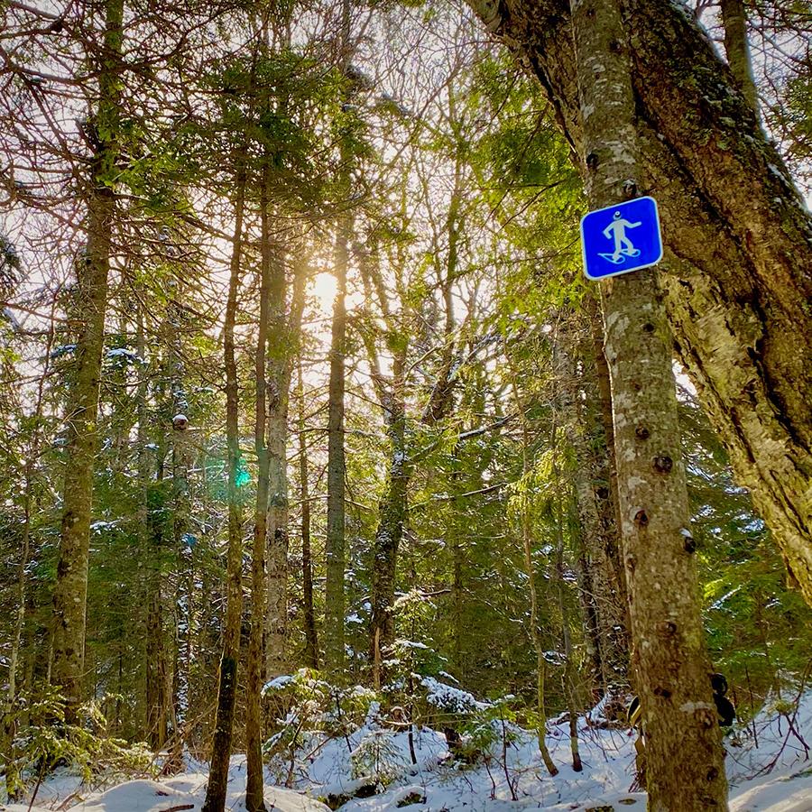 Parcours de la vieille forêt