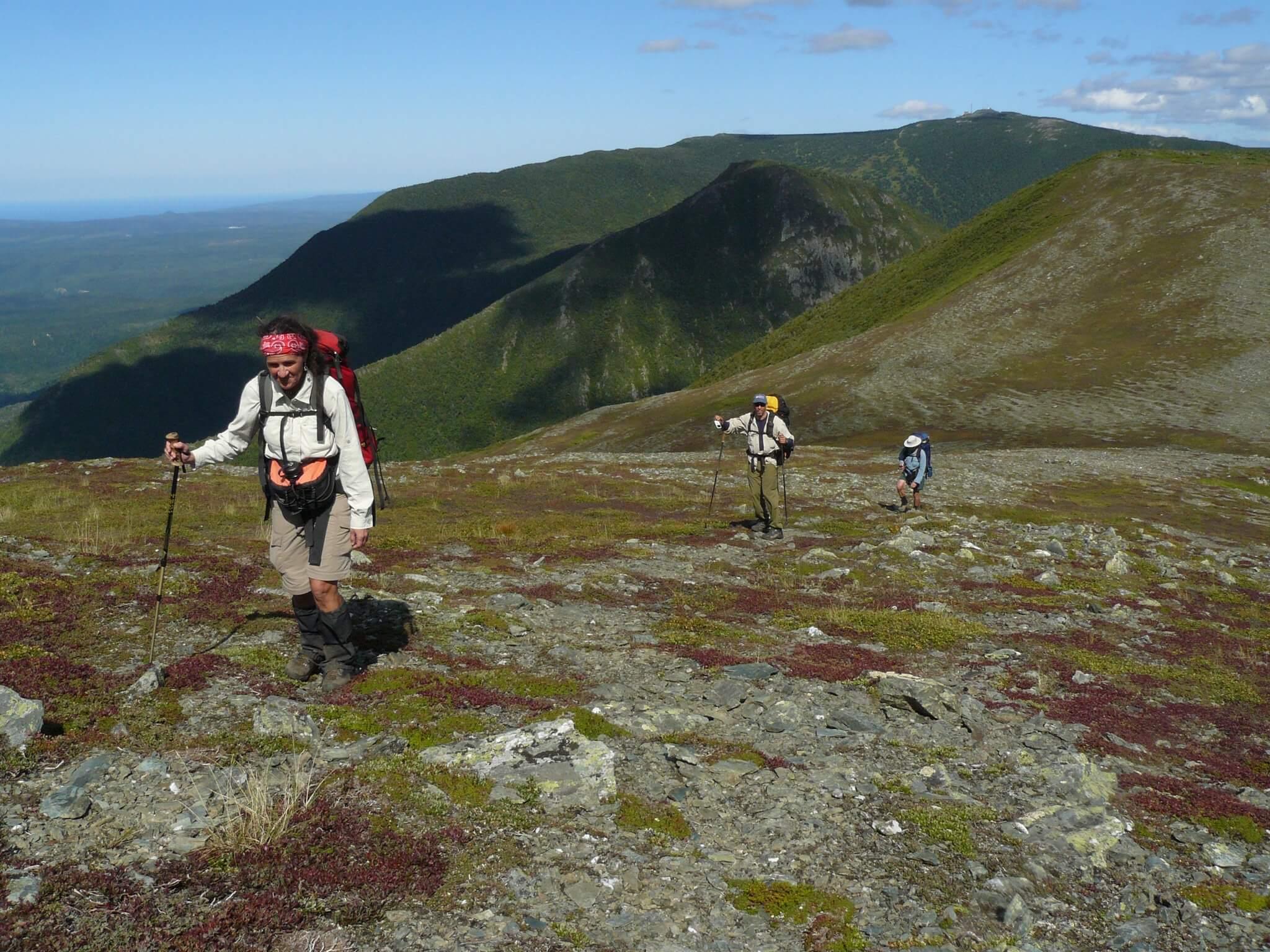 Tourisme en Gaspésie: 5 idées d'activités sous la thématique du caribou